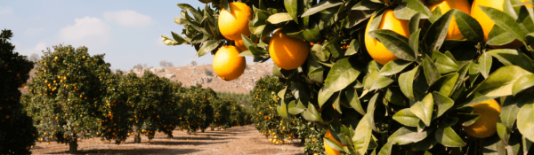 Gerber Fresh - Citrus